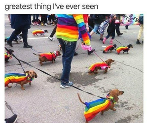 dog, lgbt, and funny image