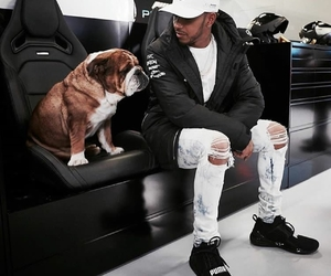 english bulldog, lewis hamilton, and mercedes amg image