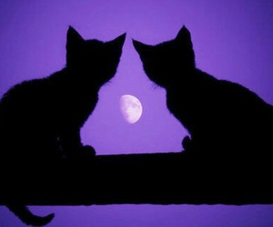 cat, moon, and purple image