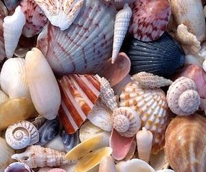 shell, beach, and sea image