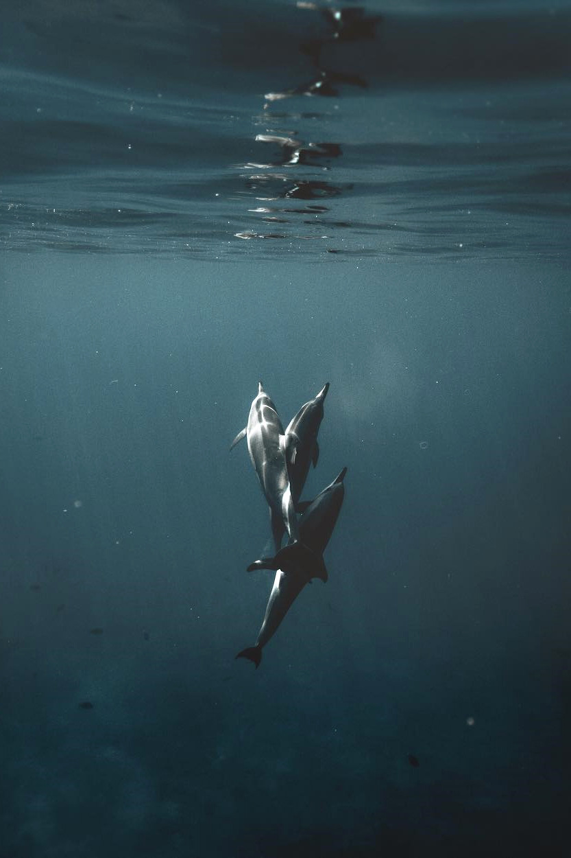 dolphin, sea, and underwater image