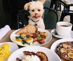 dog, food, and puppy image