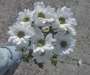 beautiful, bouquet, and daisy flower image