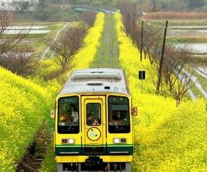 yellow, japan, and train image