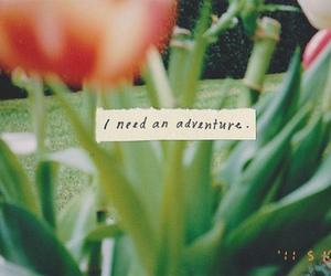 adventure, flowers, and quote image