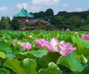 japan, flowerlover, and 東京 image