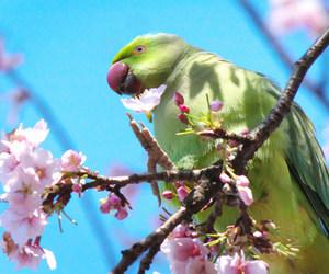 bird, birds, and Nippon image
