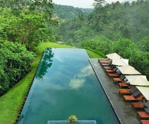 forest, views, and indonesia image