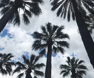 clouds, palm, and palmtrees image