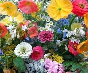 flowers, plants, and colorful image