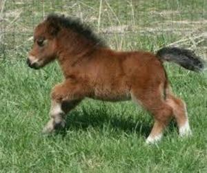 baby, brown, and horse image