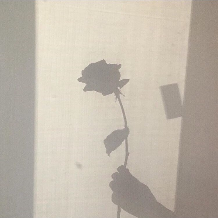 aesthetic, rose, and shadow image