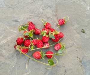 nature, strawberry, and sweet image