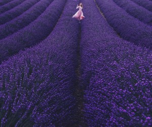 beautiful, lavender, and photography image