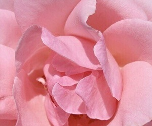 feed, pink, and rose image