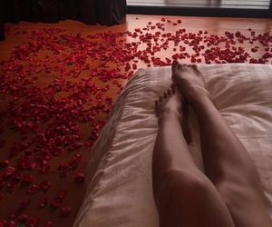petals, red, and Relationship image