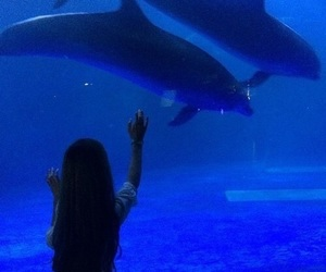 blue, dolphin, and aesthetic image