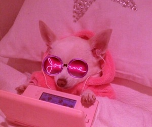 aesthetic, chihuahua, and pastel image