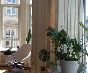 plants, apartment, and decor image