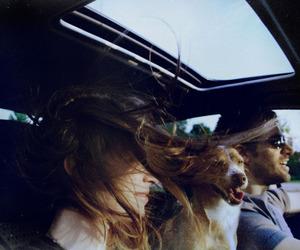 dog, travel, and car image
