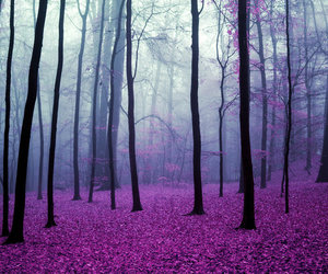 forest, tree, and purple image