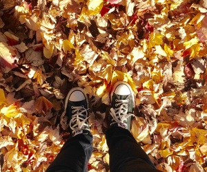 converse, fall, and leaves image
