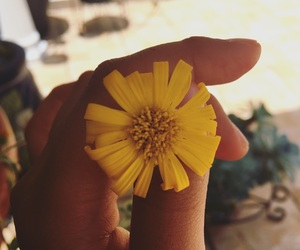 flower and yellow image