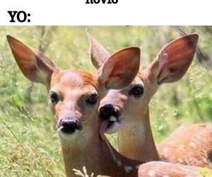 deer and funny image