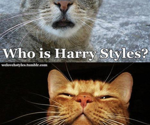 cat, funny, and Harry Styles image