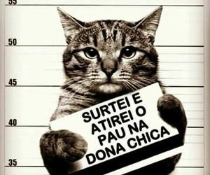 cat, funny, and engraçado image