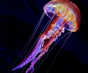 jellyfish, nature, and ocean image