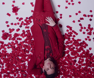 boy, brendon urie, and rose image