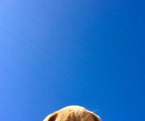 animals, köpek, and dog image