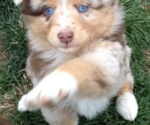 amazing, blue, and dogs image