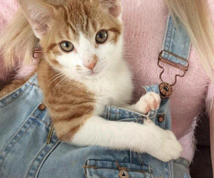 animalia and jeans overall image
