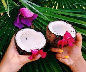 tropical, coconut, and summer image