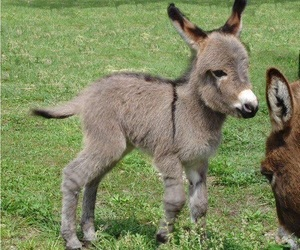 animal, donkey, and cute image