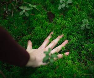 green, hand, and nature image