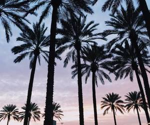 palm trees, beach, and sky image