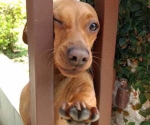 Animais, animal, and cachorro image