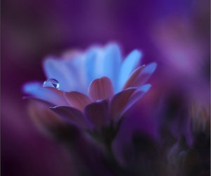 flowers, macro photography, and waterdrop image