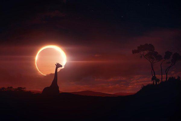 giraffe, article, and moon image