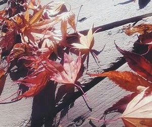 fall, photography, and leaves image