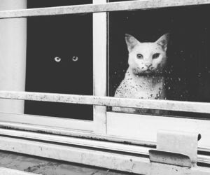beautiful, cats, and black ans white image