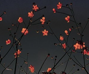 flowers, night, and tumblr image