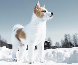 akita, animals, and puppies image