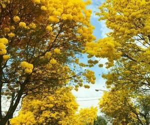 amarelo, brasil, and flowers image