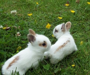 rabbits and love image
