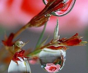 waterdrop and dewdrop image