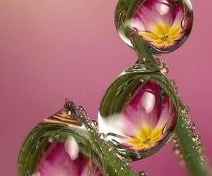 dewdrop and waterdrop image